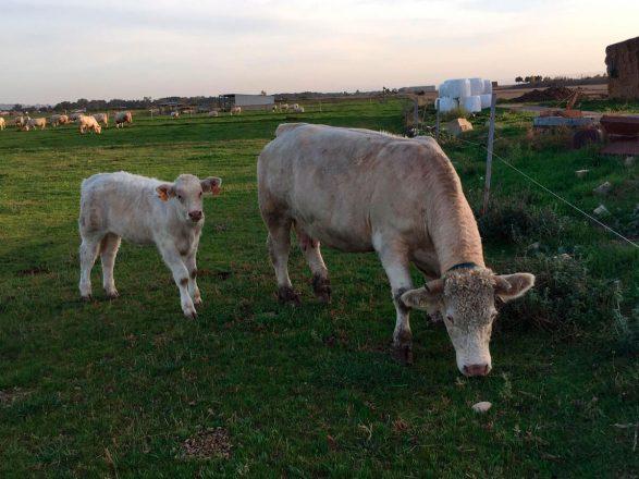 Agricola Puccia – Foto 1