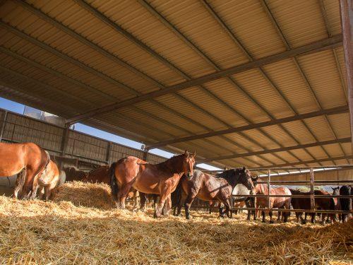 Venta de ganado equino para carne 16
