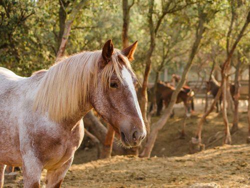 Venta de ganado equino para carne 13