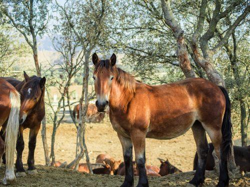 Venta de ganado equino para carne 7