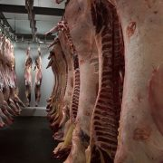 Equipirenaica – Carne 4