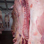 Equipirenaica – Carne 1