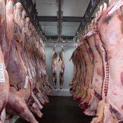 Equipirenaica – Carne 3