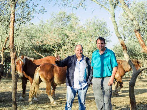 Venta de ganado equino para carne 3