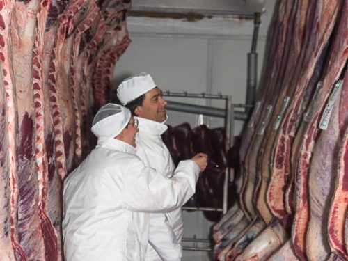 Venta de carne de ternera a distribuidores y mayoristas 35