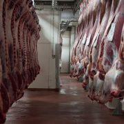 Euroganaderos – Ternera Carne 13