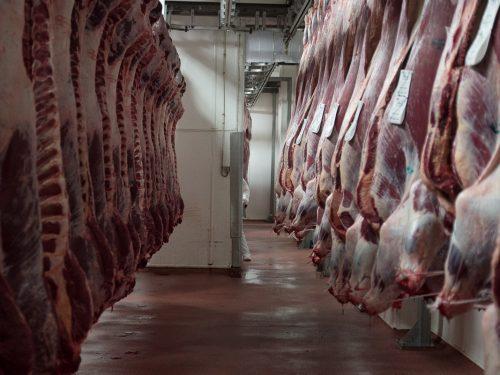 Venta de carne de ternera a distribuidores y mayoristas 28