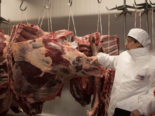 Venta de carne de ternera a distribuidores y mayoristas 15