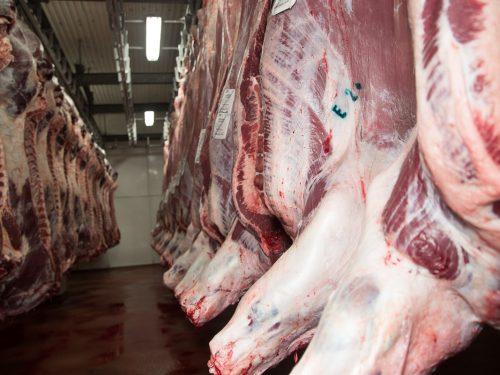 Venta de carne de ternera a distribuidores y mayoristas 22