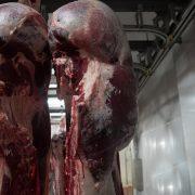 Euroganaderos – Ternera Carne 11