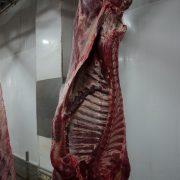 Euroganaderos – Ternera Carne 9