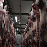 Euroganaderos – Ternera carne 6