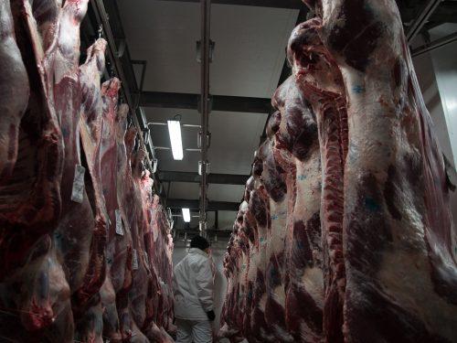 Venta de carne de ternera a distribuidores y mayoristas 17