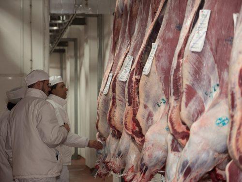 Venta de carne de ternera a distribuidores y mayoristas 1