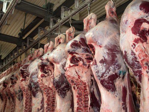 Venta de carne de ternera a distribuidores y mayoristas 10