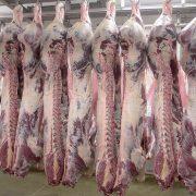 Euroganaderos – Ternera Carne 31