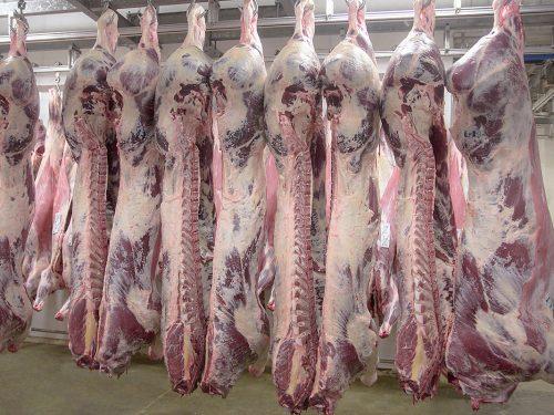 Venta de carne de ternera a distribuidores y mayoristas 4