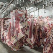 Euroganaderos – Ternera Carne 35