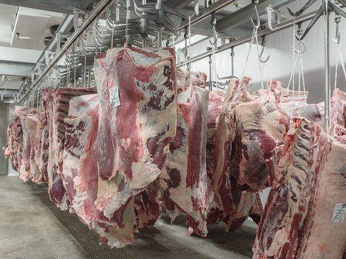 Venta de carne de ternera a distribuidores y mayoristas 31