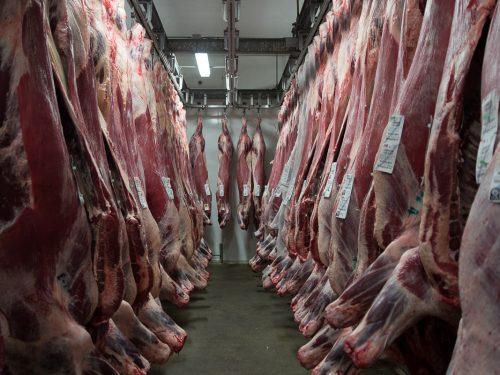 Venta de carne de ternera a distribuidores y mayoristas 6
