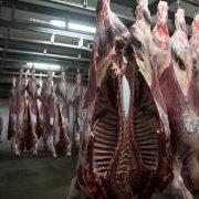 J.G. Global – Carne 4