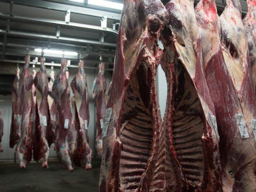 Venta de carne de ternera a distribuidores y mayoristas 39