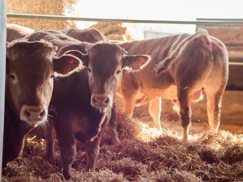 JG Global Livestock Trade S.L.U. 6