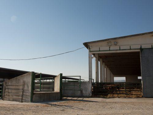 JG Global Livestock Trade S.L.U. 4