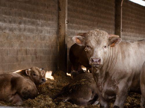 JG Global Livestock Trade S.L.U. 34