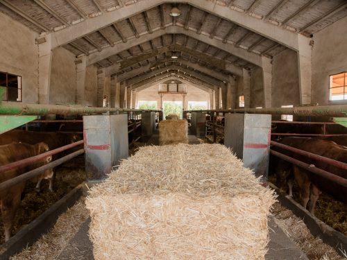JG Global Livestock Trade S.L.U. 29