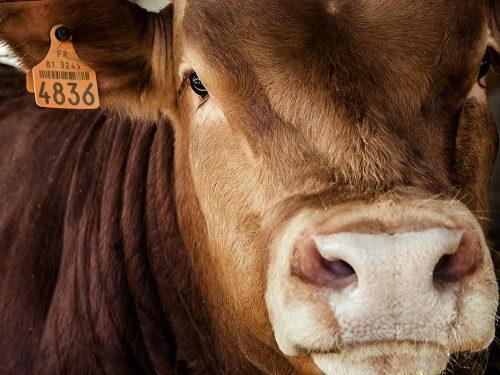 JG Global Livestock Trade S.L.U. 20