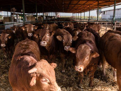 JG Global Livestock Trade S.L.U. 16