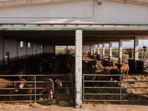 JG Global Livestock Trade S.L.U. 12