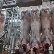 Agricola Puccia – Carne Ternera