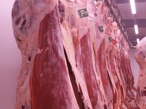 Venta de carne de ternera a distribuidores y mayoristas 41