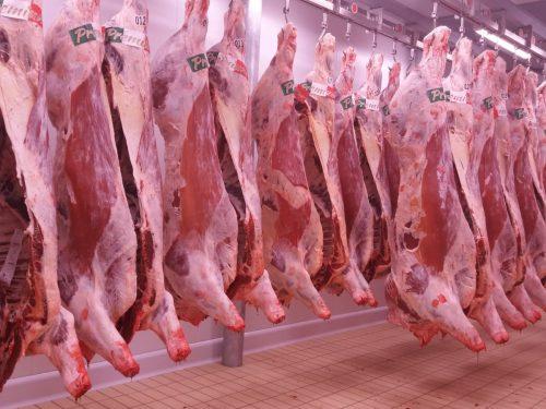 Venta de carne de ternera a distribuidores y mayoristas 30