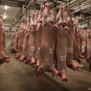 Euroganaderos – Carne Cordero 3