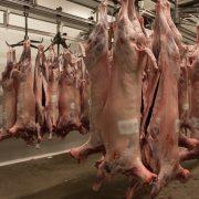 Euroganaderos – Carne Cordero