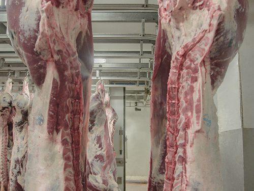 Venta de carne de ternera a distribuidores y mayoristas 37