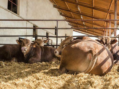 JG Global Livestock Trade S.L.U. 40