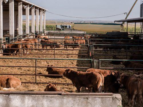 JG Global Livestock Trade S.L.U. 15